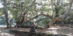 Vegan koşuculara öneri: Kayıp orman koşuları-  #doğa #koşu #orman