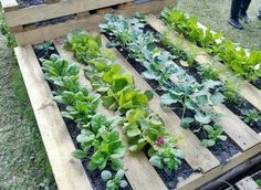 Here's another great use for the humble pallet - An instant raised garden bed for vegetables. And better still, they will automatically get planted in nice neat rows.    Keep clicking 'coz we have heaps of other recycling and repurposing ideas in this album. And you'll find even more pallet ideas on our site at http://theownerbuildernetwork.com.au/pallets/