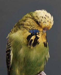 BIRD Gary Heery Book-completemmockup-162.jpg