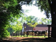 "Irene Dairy Farm - Pretoria - a great breakaway ""from the city"" venue to buy your milk or have a coffee. Sa Tourism, South Afrika, African Love, Port Elizabeth, Clotted Cream, Child Friendly, Kruger National Park, Pretoria, My Land"