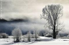 Sweet Dreams   Flickr - Photo Sharing!