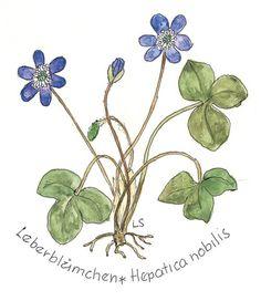 Originalzeichnung des Lederblümchens von Loki Schmidt