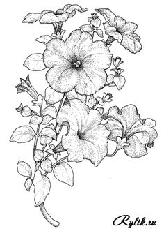 Petunias by wynoma.tomey Less proud than they deem me Flower Sketches, Drawing Sketches, Art Drawings, Illustration Botanique, Botanical Illustration, Flower Coloring Pages, Coloring Book Pages, Floral Drawing, Pyrography
