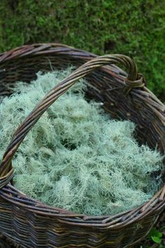 Usnea, an easy-to-identify lichen, is such an important medicinal herb to have in the medicine cabinet. It is anti-viral, anti-bacterial, anti-fungal and anti-protozoan | Chestnut School of Herbs