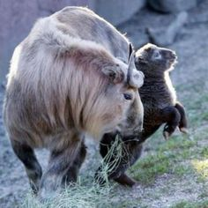 Baby Animals and their Mothers |