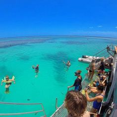 Lady Musgrave Snorkelling www.parkmyvan.com.au #ParkMyVan #Australia #Travel #RoadTrip #Backpacking #VanHire #CaravanHire