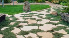 Thyme-fringed pavers