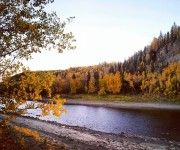 Petitot River and trees in fall Northwest Territories, North West, Country Roads, Trees, Canada, River, Fall, Image, Autumn