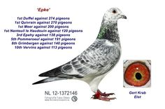 12-1372146 Epke Pigeon Pictures, Homing Pigeons, Pigeon Loft, Animal Pictures, Racing, Birds, Animals, Collection, Pigeon