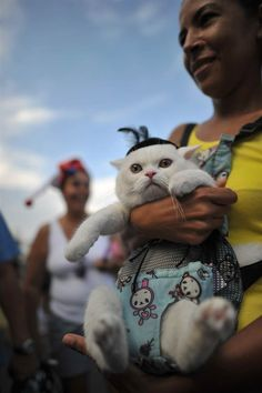 A fancy dressed cat takes part in the animal carnival parade at Copacabana beach in Rio de Janeiro, Brazil on Feb. 12.