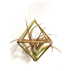 """N E W !  Handcut brass himmeli ornaments perfect for displaying air plants now available from The Skygardens! Each one is handmade by me using handcut brass and can come with or without an air plant. Currently two designs available - diamond or sphere. Link in bio.  Himmeli from the Germanic word for """"sky"""" or """"heaven"""" are traditional Finnish ornaments originally made from straw and hung up during the festive season. They used to be placed over the dining table to ensure a fruitful crop for…"""