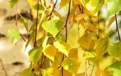 Середина жизни – чувства, многоточье..., осень обнажила прошлого концы, ветками играя, встречу нам пророчит, и кружат в истоме листья-сорванцы... (...)