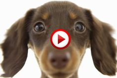 Puppy Love Video #animals, #dogs, #cute, #pinsland, #yangutu, https://apps.facebook.com/yangutu