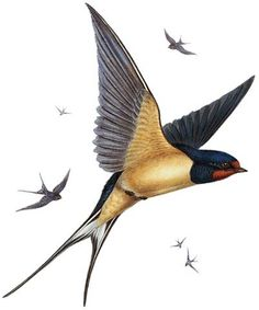 Swallow - Natural History Museum greeting card