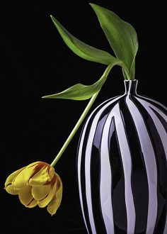 Beauty Greeting Card featuring the photograph Single Tulip In Vase by Garry Gay
