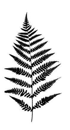 Fern tattoo: would love this in ink this color green and smallish. Description from pinterest.com. I searched for this on bing.com/images