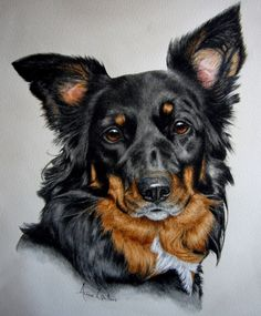 Collie cross - dog portrait, painting by artist Anne Zoutsos