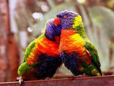 beautiful-love-birds