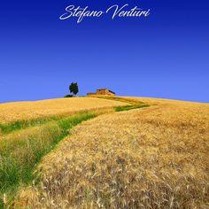 Un casolare toscano abbandonato circondato da campi di grano. Scarica questa foto ad alta risoluzione e usala come meglio credi.
