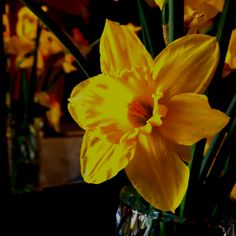 Daffodil from my garden in crystal vase.