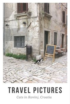 Travel Pictures: Street Cats of Rovinj, Croatia. Click here to see the photo series: http://www.traveling-cats.com/2014/03/cats-from-rovinj-croatia.html (Rovinj, Croatia, travel pictures, cat pictures, photo series)