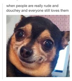This doggy's face is so funny!!!!
