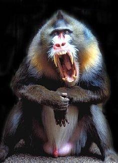 monkeyish monkey