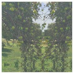 Green Apple Tree Branch Fabric