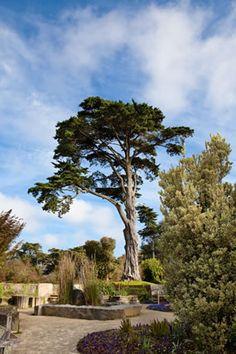 San Francisco Botanical Garden-Escape to a unique, 55 acre urban oasis of extraordinary beauty.  #Botanical #Garden