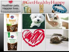 Healthy Pets Thrive with More Love And Playtime – #GetHealthyHappy via @DiscoverSelf
