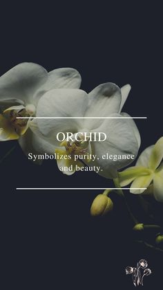 Flower Symbol, Flower Meanings, Daffodils, Orchids, Symbols, World, Flowers, Movie Posters, Beauty