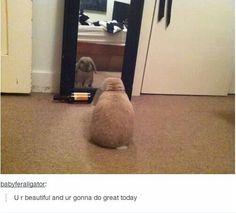 Cute animals bunny rabbit humor funny tumblr internet mirror