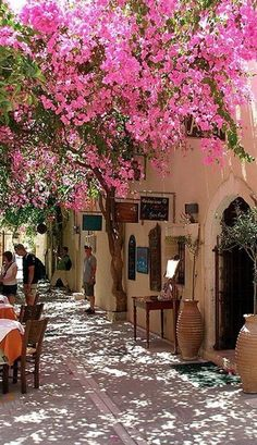 Blooming bouganvillea vines in Rethymno, Crete