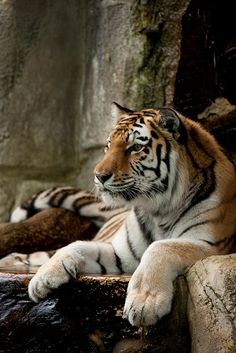 """I like to pretend like I'm a wild animal, like a tiger, when I run. I especially love the song """"NEON TIGER"""" by The Killers."""
