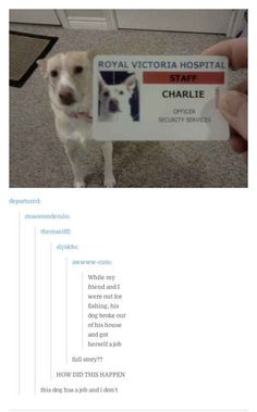 When this dog achieved. | 31 Times Tumblr Was The Most Relatable Place On The Internet