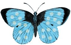 The Background Fairy: Digital Scrap - Turquoise Butterfly - Build Your Own Background