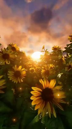 """Ramblings on Twitter: """"Keep your face always toward the sunshine And shadows will fall behind you. Walt Whitman… """" Sunflower Wallpaper, Flower Background Wallpaper, Photo Background Images, Scenery Wallpaper, Photo Backgrounds, Wallpaper Backgrounds, Beautiful Nature Pictures, Beautiful Nature Scenes, Beautiful Nature Wallpaper"""