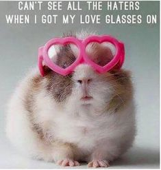 Can't see all the haters when I got my love glasses on. Wish I was able to wear my love glasses more often! Hello Friday, Happy Friday, Happy Weekend, Funny Animal Pictures, Funny Animals, Animal Funnies, Dog Funnies, Squirrel Pictures, Animal Memes