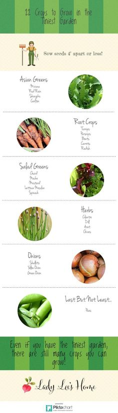 22 Crops to Grow in the Tiniest Garden - Here is a collection of 22 crops that you can sow 4'' apart or less. This makes them perfect for the small garden, so you can produce a lot in a small space! #LadyLee'sHome