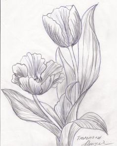 Pen and ink tulip inspiration Pencil Drawings Of Flowers, Flower Sketches, Pencil Art Drawings, Easy Drawings, Drawing Sketches, Tulip Drawing, Tulip Painting, Fabric Painting, Painting & Drawing