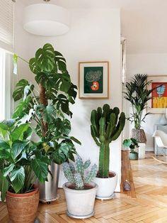 Un rincón de plantas decorativas en el salón