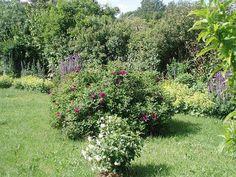 Wildrosenhecke pflanzen - Seite 1 - Gartenpraxis - Mein schöner Garten online