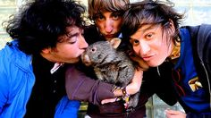 The photo that literally had to happen . The Wombats meet a real life marsupial on an early trip to Australia in Source: News Limited The Wombats, The Kooks, Ray Charles, March Madness, Alternative Music, Good People, Indie, Best Friends, Tv Shows