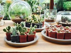 Pet-safe indoor plants are essential to the health of your dog or cat. Here's our top 10 pet-safe indoor plants to keep your homes green and pets happy!