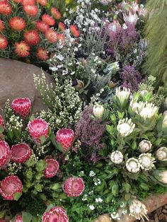 abc-of-gardening:  Fynbos on We Heart It. http://weheartit.com/entry/77548563/via/ninke_v