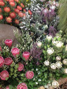 abc-of-gardening:  Fynbos on We Heart It. http://weheartit.com/entry/77548563/via/ninke_v