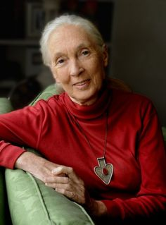 Jane Goodall trying to save wildlife of Africa one chimp at a time