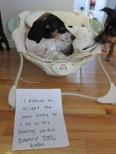 Dog Shaming - I refuse to accept the new baby so I sit in his bouncy chair. Bounce THIS baby.
