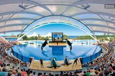 Loro Parque & Siam Park Combined Tickets