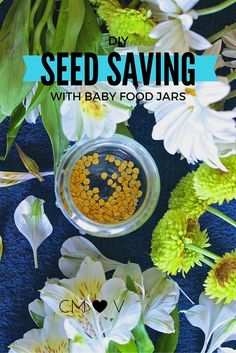 Don't throw away those seeds from your fruit and vegetables! SAVE THEM and Grow them in some dirt for free food!